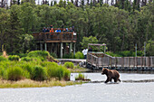 Visitors viewing a Grizzly bear fishing for salmon from an observation platform along the Brooks River in Katmai National Park & Preserve, Southwest Alaska, Summer