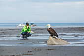 Man photographs a Bald Eagle perched on a rock, Bishop's Beach, Anchor Point, Southcentral Alaska, USA