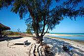 'A table set for a meal on the beach in the shade of a tree; Vamizi Island, Mozambique'