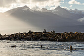 Sea lions basks in the last of the days light on a small island in Lynn Canal, Inside Passage, Alaska, near Juneau. The steep peaks of the Chilkat Mountains rise from the sea beyond.