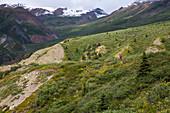 A woman takes a trail run in Kluane National Park, Yukon Territory, Canada.