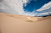 A small patch of grass finds a home in the Great Sand Dunes National Park in Colorado.