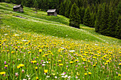 'Summer flower meadows with alpine chalets and barns; Zinal, Switzerland'