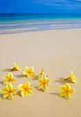 Hawaii, yellow plumeria flowers on the beach.