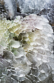 'Ice forms near a waterfall; Olney, Oregon, United States of America'