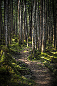 'Trail through the rainforest outside of Cordova, Southcentral Alaska; Alaska, United States of America'