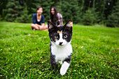 'Calico kitten coming towards camera on the grass with two girls sitting in the background; Sherwood Park, Alberta, Canada'