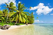 'Tropical sunny island with palm trees and blue ocean, Raiatea, French Polynesia'