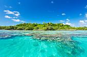 'Tropical sunny island with palm trees and blue ocean, Tikehau, French Polynesia'