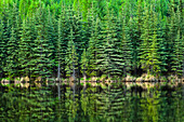 'Fresh greens of boreal forest reflect on Beaver Pond, Chena River State Recreation Area; Fairbanks, Alaska, United States of America'