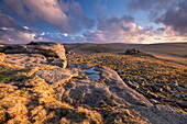 Rich evening sunlight bathes the moorland at Higher Tor in winter, Dartmoor National Park, Devon, England, United Kingdom, Europe