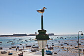 Sea Gull and boats at La Caleta Beach in the historical town of Cadiz, Costa de la Luz, Cadiz Province, Andalusia, Spain, Europe