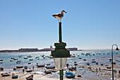Moewe und Boote am Strand La Caleta in der Altstadt von Cádiz, Costa de la Luz, Provinz Cádiz, Andalusien, Spanien, Europa