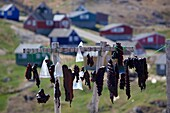 Seal Meat hung up to dry, Tasiilaq, East Greenland, Greenland