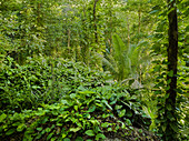Vegetation in the jungle, La Digue Island, Seychelles