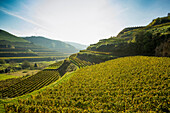 Hills and vineyards near Schelingen, Kaiserstuhl, Baden-Württemberg, Germany