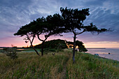 Urehoved, Denmark, island, isle, Aero, coast, sea, trees, land tongue, way, evening mood, sundown
