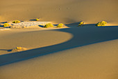 Mesquite Sand Dunes, USA, Amerika, Vereinigte Staaten, Kalifornien, Death Valley Nationalpark, Dünen, Sand, Sanddünen, Morgenlic