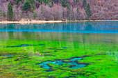 Jiuzhaigou, Five Flowers, lake, China, Asia, national park, spring, lake, azure color, algae, green algae, wood, forest,