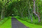 Castle park Mey Castle, Great Britain, Scotland, Europe, wood, forest, way, trees, avenue