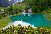 Lac blue, Switzerland, Europe, canton Valais, nature reserve Val dHérens, lake, color, brook, spring, source, flowers, Alpine roses