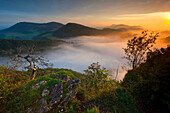 Look, from Wasserfluh, Switzerland, canton Aargau, view point, hill, wood, forest, fog, morning mood, sunrise, wood, dead tree, cliff