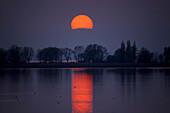 Lake of Constance, Austria, Europe, Vorarlberg, Rhine delta, lake, lake shore, trees, evening mood, sun, sundown, reflection