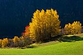 Alvaneu, Switzerland, Europe, canton Graubunden, Grisons, Albula valley, trees, broad_leaved trees, autumn colouring, autumn, me