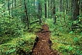 Opal Creek Trail, Opal Creek Scenic Recreation Area, Willamette National Forest, Oregon.