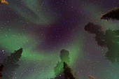 Aurora Borealis Northern Polar Lights over the boreal forest outside Yellowknife, Northwest Territories, Canada, MORE INFO The term aurora borealis was coined by Pierre Gassendi in 1621 from the Roman goddess of dawn, Aurora, and the Greek name for north