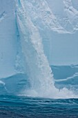 A huge tabular iceberg encountered in the Drake Passage approaching the Antarctic Peninsula during the summer months  Meltwater from within the iceberg has caused this waterfall  More icebergs are being created as global warming is causing the breakup of