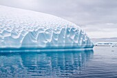 Iceberg detail in and around the Antarctic Peninsula during the summer months, Southern Ocean  MORE INFO An increasing number of icebergs are being created as climate change is causing the breakup of major ice shelves and glaciers throughout the Antarctic
