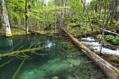 The Plitvice Lakes in the National Park Plitvicka Jezera in Croatia  The upper lakes, small ponds  The Plitvice Lakes are a string of lakes connected by waterfalls  They are in a valley, which becomes a canyon in the lower parts of the National Park  The