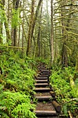 Trail in Wallace Falls State Park, Washington
