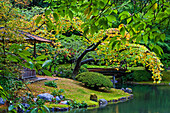 Scene from the Nitobe Japanese garden at UBC in Vancouver, Canada.