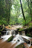 Landscape photo of a stream in a dense green forest. Debengeni Falls, Magoebaskloof, Limpopo, South Africa.