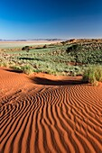 Landscape photo of a green desert valley after plentiful rains. Namib Rand, Namibia.