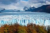 Landscape photo of the Perito Moreno glacier viewed over bright autumn foliage. Perito Moreno Glacier, Patagonia, Argentina.