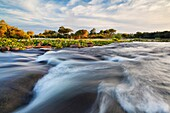Landscape view of a rapids in the Zambezi river just above Vic Falls. Victoria Falls, Zimbabwe and Zambia.