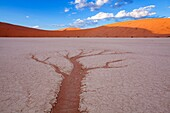 Landscape photo of a drainage pattern resembling a tree in Deadvlei. vlei, Namib Naukluft National Park, Namibia.