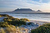 Landscape photo of vegetated dunes in afternoon light with table mountain in the background. Blouberg strand, Cape Town, South africa.
