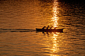 Rowing boat in evening sun, Torri del Benaco, Lake Garda, Verona, Veneto, Italy