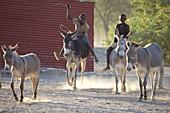 Herero boys riding on donkeys, Sesfontain, Namibia
