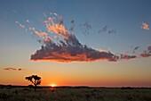 Vom Sonnenuntergang angeleuchtete Wolke, Namibia