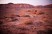 Evening in the desert, Crater rim in the background, Machtesch Ramon, Negev Desert, Israel
