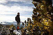 Hiker standing between snow-covered mountain pines, descent from Unnutz Mountain (2078 m), Rofan Mountains, Tyrol, Austria