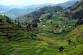 Africa, African, Travel, Nature, Landscape, Kisoro, Uganda, Sub_Saharan, East Africa, Scenic, landscape, travel, trip, Adventure, tropics, tropical, equator, equatorial, Third world, Mount, mountain, mountains, rural, Field