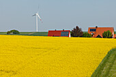 Wind turbines, houses with solar cells, photovoltaic cells, rapeseed field, bio-energy, renewable energy, near Gunzenhausen, Mittelfranken, Lower Franconia, Franconia, Bavaria, Germany, Europe