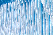 Iceberg detail in and around the Antarctic Peninsula during the summer months, Southern Ocean  MORE INFO An increasing number of icebergs are being created as climate change is causing the breakup of major ice shelves and glaciers all around the Antarctic