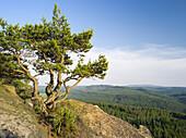 Elbe Sandstone Mountains (Elbsandsteingebirge) in the National Park Saxon Switzerland (Saechsische Schweiz). Rock formations and pine tree at inselberg Pfaffenstein. The bohemian mountains in the background. Europe, central europe, germany, saxony, June.